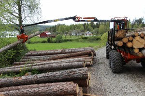 woodtiger 4